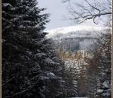 zima35