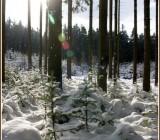 zima54